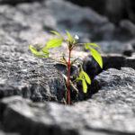 Emergencia climática: ¿qué nos pueden aportar las otras culturas y religiones?
